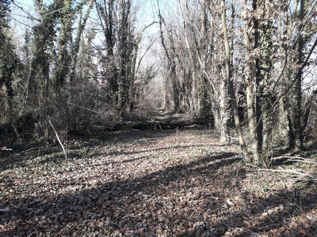Foto del Bosco della Man di Ferro situazione senza manutenzioni, inverno 2020. Viale.