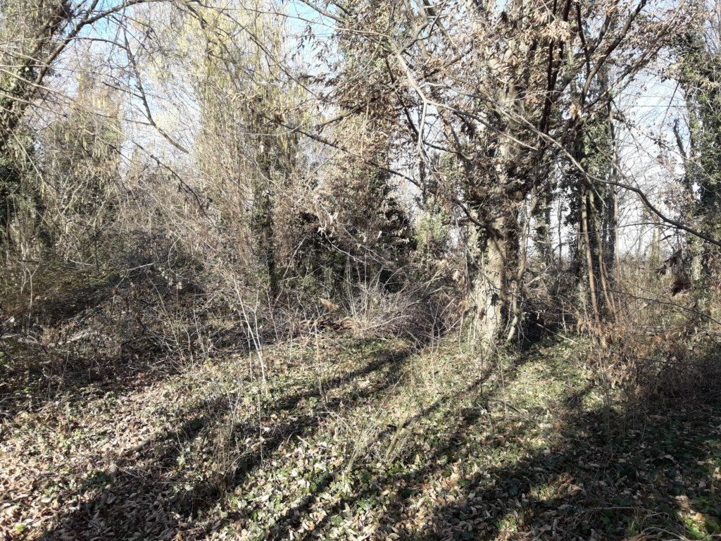 Foto del Bosco della Man di Ferro situazione senza manutenzioni, inverno 2020